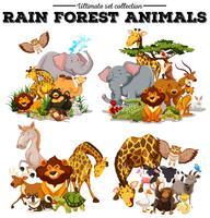 Verschillende soorten regenwouddieren