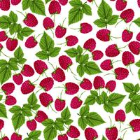 Raspberry naadloze patroon
