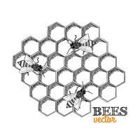 Honingbijen en honingraat vector