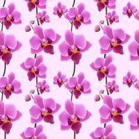 Orchidee bloesem naadloze patroon vector