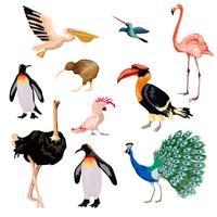 Exotische vogels ingesteld