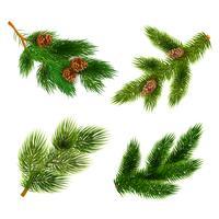 Fir en pine bomen takken pictogrammen instellen