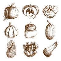 Pompoen hand getrokken pictogrammen instellen doodle