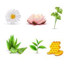 Organische cosmetische ingrediënten Set vector