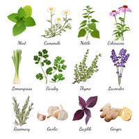 Kruiden en weide bloemen kruiden set vector