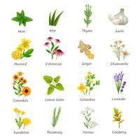 Geneeskrachtige kruiden planten plat pictogrammen instellen vector