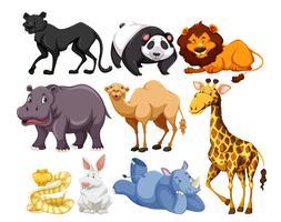 mix van wilde dieren vector