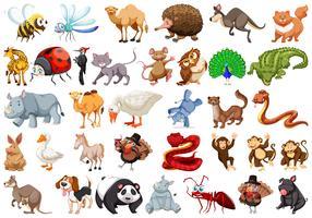 Set van cartoon dieren vector