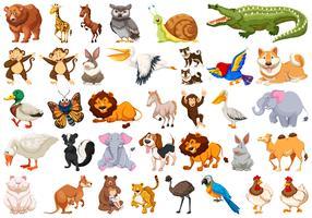 Set van wilde dieren vector