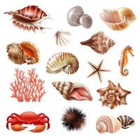 Seashell realistische set vector