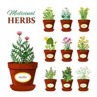Medische kruiden in potten met labels vector