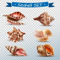 Seashell transparante set vector