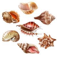 Realistische Seashell Set vector
