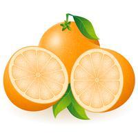 oranje vectorillustratie