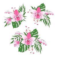 Exotische tropische bloemenboeketten paphiopedilum orchidee bloeit vectorontwerpreeks.