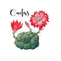 Cactus in woestijnvector en illustratie, hand getrokken die stijl, op witte achtergrond wordt geïsoleerd.