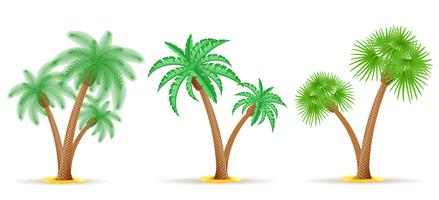 palmboom vectorillustratie