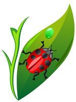 lieveheersbeestje op blad vector