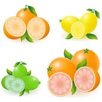 set van citrus oranje citroen kalk grapefruit vectorillustratie