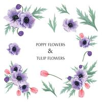 Popy en Tulpen bloeit waterverfboeketten botanische bloemenllustration geïsoleerde vector