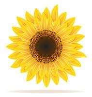 zonnebloem vectorillustratie vector