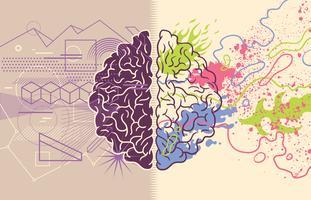 Hersenhelften van de mens vector