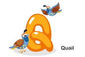 Q voor kwartels vector