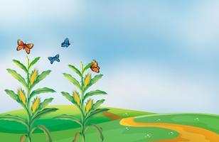 Een graangebied bij de heuvel met vlinders