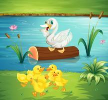 Eendenfamilie bij de rivier