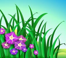 Een tuin met paarse bloemen vector