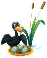 Een eend dichtbij het nest met eieren