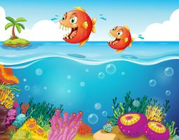 Twee enge piranha's in de zee vector