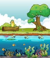 Een rivier en een lachende kikker
