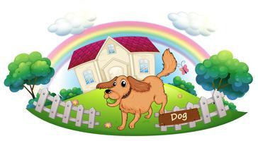 Een hond die voor een huis speelt