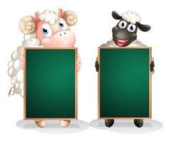 Een zwart en een wit schaap met lege schoolborden vector