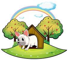 Een hond in het hondenhok met een appelboom aan de achterkant