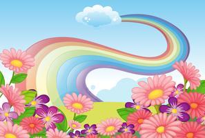 Bloemen op de heuveltop en een regenboog in de lucht vector