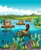 Vier bevers die in de rivier spelen