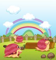 Lachende slakken en een regenboog