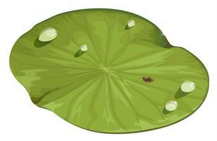 Lotus blad vector
