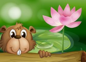 Een bever naast een roze bloem