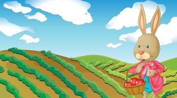 Een konijn en een boerderij