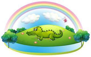 Een alligator op de heuvel met een regenboog