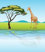 Een giraffe naast de rivier