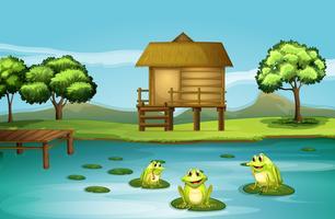 Een vijver met drie speelse kikkers