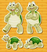 Schildpad ingesteld