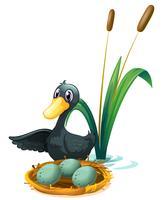 Een eend aan de vijver naast haar eieren