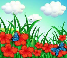 Een tuin met rode bloemen en blauwe vlinders vector