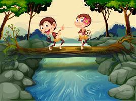 Twee aapjes dansen tijdens het oversteken van de rivier