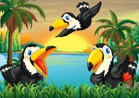 Drie wilde vogels dichtbij de rivier